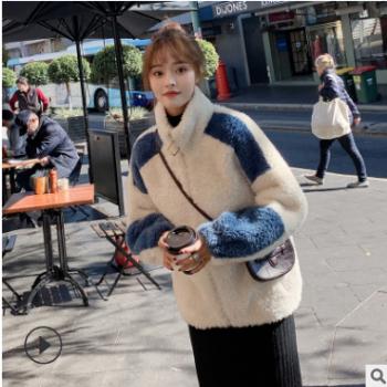 皮毛一体加厚颗粒绒大衣2019冬新款羊羔毛外套女短裤厂家一件代发